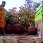 Cargo pengiriman tanaman Jogja